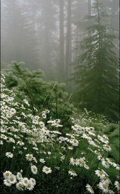 70 ideas flowers wild forest mists for 2019 Beautiful World, Beautiful Places, Beautiful Pictures, Landscape Photography, Nature Photography, Photography Tips, Landscape Edging Stone, Landscape Paintings, Acrylic Paintings