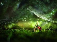 Photographie, Numérique dans Nature, Animal, Insecte, Olympus E3, Helios 44-3 - Image #596849