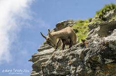 VAL CHISONE - ROURE Roreto Castel del Bosco Villaretto Balma - Parco Naturale Orsiera Rocciavré - grattatina | par Mario Turcato