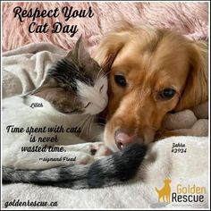 RESPECT YOUR CAT DAY??? I think we all know who's responsible for this days existence and it isn't the retailers!! #goldenretriever #goldenhour #rescue #rescuedog #rescuedogsofinstagram #adoptdontshop #goldenretriever #secondchances #IChoseToRescue #adoptdontshop #rescuedog #rescue #rescued #adopteddog #respect #respectyourcat #cat Respect Yourself, Kitty Cats, Cat Day, Rescue Dogs, Adoption, Animals, Foster Care Adoption, Kittens, Animales