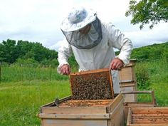 Setting Up a Beehive Is the Hardest Part of Beekeeping — We Promise - Sustainable Farming - MOTHER EARTH NEWS