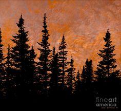 Fiery Sunset Sky Evergreen Silhouette by John Stephens Acrylic Painting Trees, Pine Tree Painting, Shadow Painting, Tree Line Tattoo, Pine Tree Tattoo, Silhouette Artist, Silhouette Painting, Forest Sunset, Sunset Sky
