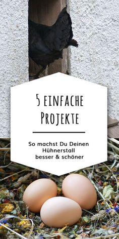"""Den Hühnerstall verschönern So your chicken coop becomes practical and beautiful: 5 fast projects that cost little money. These """"mini-projects"""" are for every budget and require little craftsmanship. The right thing for a bit of DIY in between. Diy Living Room Decor, Organic Chicken, Fat Burning Drinks, Diy Garden Projects, Garden Ideas, Backyard Ideas, Chickens Backyard, Coops, Woodworking Projects Plans"""