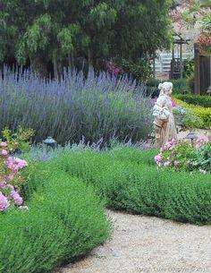 Practical Drought Tolerant Plants Rough Luxe Lifestyle Teucrium