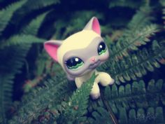 #lps #outside #lps_photography #Петы #ladycat #kissalps #shorthair