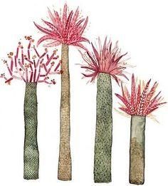 They look like Baobab Trees