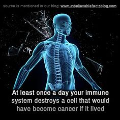 "unbelievable-facts: "" At least once a day your immune system destroys a cell that would have become cancer if it lived "" Bizarre Facts, Fun Facts, Human Body Facts, Medical Coder, Unbelievable Facts, The Cell, Live Long, Nice Body, Immune System"