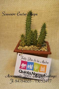 Suculentas en baldecitos de zinc souvenirs con for Suculentas santiago