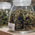 """A roundup of marijuana-related news includes a profile of Ethan Nadelmann, """"the world's roving prime minister of pot"""" and the highly competitive medical marijuana market in Massachusetts."""