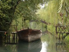 in a boat anywhere or at Weeping Willow Canal, Clitunno, Italy