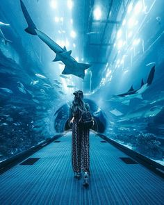 Connect with your inner wanderlust! Immerse yourself in a magical experience at Aquarium & Underwater Zoo😍 Aquarium Pictures, Zoo Pictures, Travel Pictures, Travel Photos, Dubai Aquarium, Visit Dubai, Fotos Goals, Dubai Travel, Underwater