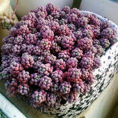 Суккуленты - цветы пустыни