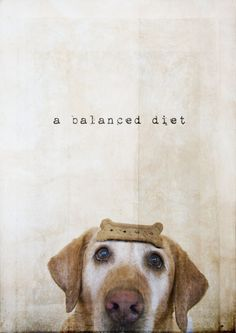 Funny animal - a balanced diet I Love Dogs, Puppy Love, Cute Dogs, Funny Dogs, Funny Animals, Cute Animals, Wild Animals, Charles Darwin, Mundo Animal