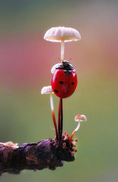 Lady in Red Beautiful Bugs, Amazing Nature, Photo Coccinelle, Mushroom Pictures, Mushroom Art, Nature Aesthetic, Tier Fotos, Nature Animals, Belle Photo