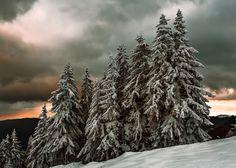 Winter - Winter in the Carpathian Mountains