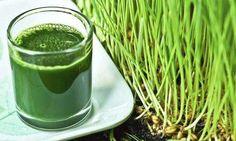 15 beneficios de la hierba de trigo que quizá no sabías - Mejor Con Salud