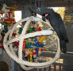 Atom or spherical bird gym, a great way to hang large toys such a way bird can reach it from all around.