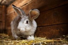 Tips for Cleaning Your Rabbits' Living Areas...