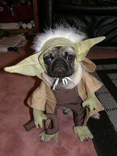 Pugs in Costumes - I think that dressing your dog up is always a bad idea. I don't care if it is a bandanna or a full-on Yoda costume, they are all equally bad. Nerdy Halloween Costumes, Star Wars Costumes, Pugs In Costume, Pet Costumes, Yoda Costume, Movie Costumes, Costume Ideas, Baby Animals, Funny Animals