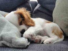 Ya I think I want a puppy...I'd take this one.