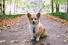 Fabulous Friday Fall Photos! - The Daily Corgi