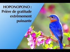 Gratitude, Le Reiki, Conscience, Mystic, Calming Music, Evening Meditation, Neuroscience, Be Grateful, Thanks