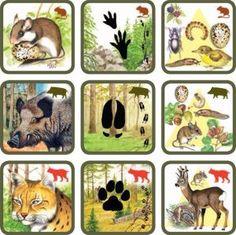 * Natuurspel! Zoek het dier bij zijn sporen en voedsel! 4-6