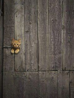 Little kitty in a door...