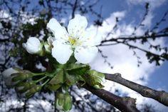 PRANOSTIKA NA NEDEĽU 30.4.: Jaro krásne všetkým tvorom spásne