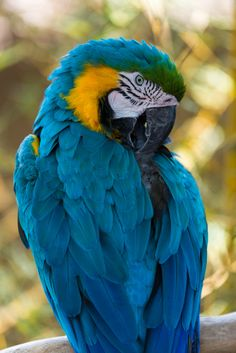 Blue Macaw at Santa Barbara Zoo by Braineack on 500px