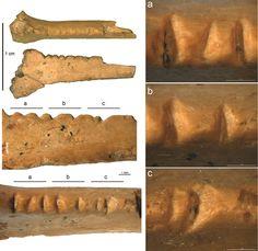 Carved raven bone discovered in Crimea is Neanderthal 'art'