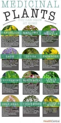 Personal life: I have a passion for alternative medicine, and my dream is to have an herb garden that I can use for preventative and therapeutic medicinal uses. This is a nice infographic to break down the basic plants and their functions.