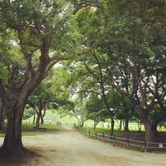 경주교촌마을