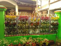 #verticalgardenwall #verticalgarden #wallplanter #tropicalplant #tropicalgarden #gardening #wellbeing #momslife #DIYgardening