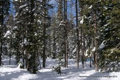 Say you're lost in a wilderness area. Survivors had to decide if it's in their best interest to remain where they were or to attempt to make...