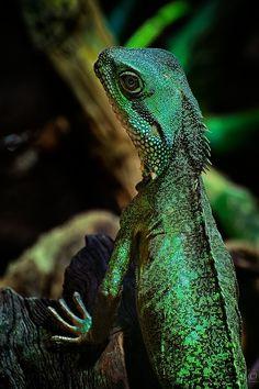 Mr. Lizard by Christian Meermann