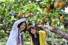 梨と巨峰の「瀧内巨峰園(たきうちきょほうえん)」