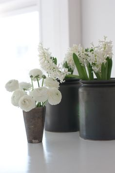 white ranunculus & white hyacinths    Available in Oct and Nov