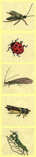 Natural Garden Pest Control: Safe, Non-Toxic Methods & Solutions   Eartheasy.com