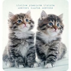 Hanna Marin, Frozen, Cats, Photography, Animals, Gatos, Photograph, Animales, Animaux
