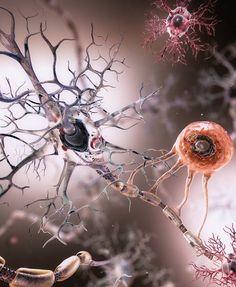 Neuron, Oligodendrocytes and Microglia.  Medical Animation by Joel Dubin, 2014.