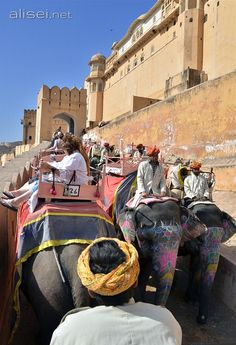 Jaipur (india) - salita all'Amber Fort sul dorso di un elefante ............................................................   #travel #trip #beautifuldestination #viaggi #viaggiare #viaggio #voyager #vacanza #traveling #photo #travellife #passionpassport #world #traveltheworld #landscapelovers #traveller #travelingram #beautifulplaces #traveladdict #travelphoto #travelpics #scenery #travels
