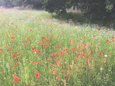 How to create a beautiful mini meadow garden - The Middle-Sized Garden | Gardening Blog