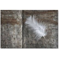 Trademark Fine Art 'Feather on Wood II' Canvas Art by Cora Niele, Size: 30 x 47, Multicolor