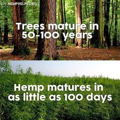 So try other resources. A tree is important for the whole earth. Use hemp for paper products!