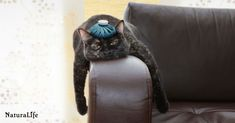 Pet health is a little harder to monitor than human health. Here are some signs that your four-legged-friend might be hurting. What Is A Hangover, Cat Design, Yoga Teacher, Cat Breeds, Cat Memes, Pugs, Funny Cats, Cat Lovers, Kittens