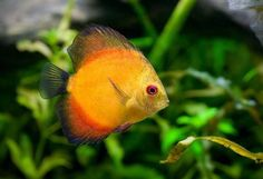 Kudy z nudy - Obří akvárium Hradec Králové - procházka deštným pralesem a po dně tropické řeky