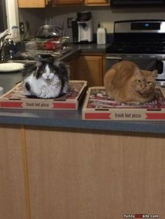 Guarding The Pizza