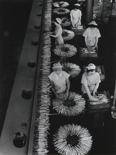 Asparagus Line, Harvest Foods, Cheltenham, Victoria  Wolfgang Sievers, 1957