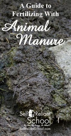 How to compost animal manure for your garden, and the precautions you should take when using it. #beselfreliant